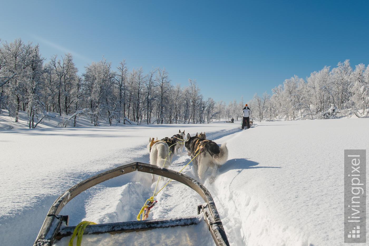 Husky Schlitten-Tour, Winter-Wunder-Land
