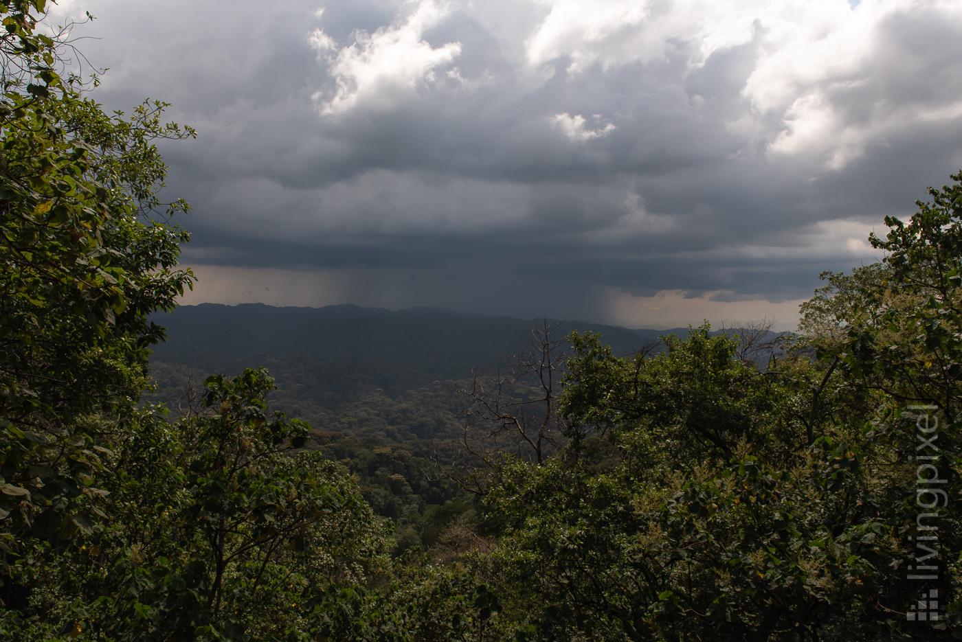 Regenwald, Bwindi N.P.