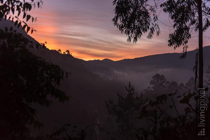 Regenwald im Sonnenaufgang
