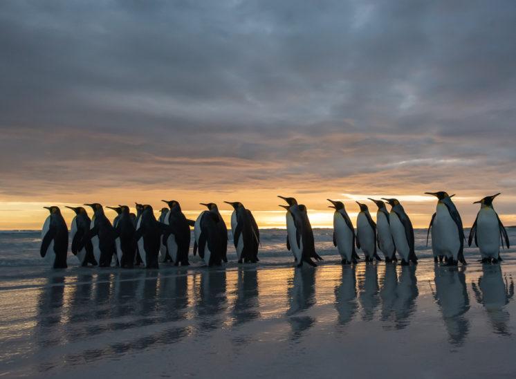 Galerie Falklandinseln