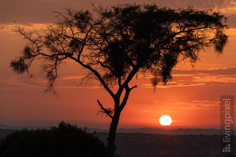 Sonnenaufgang im Ishasha