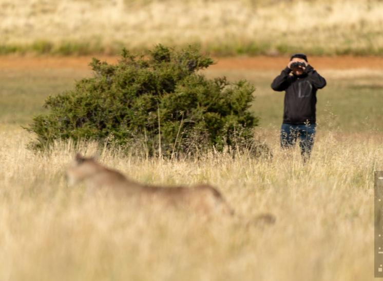 Puma-Tracking