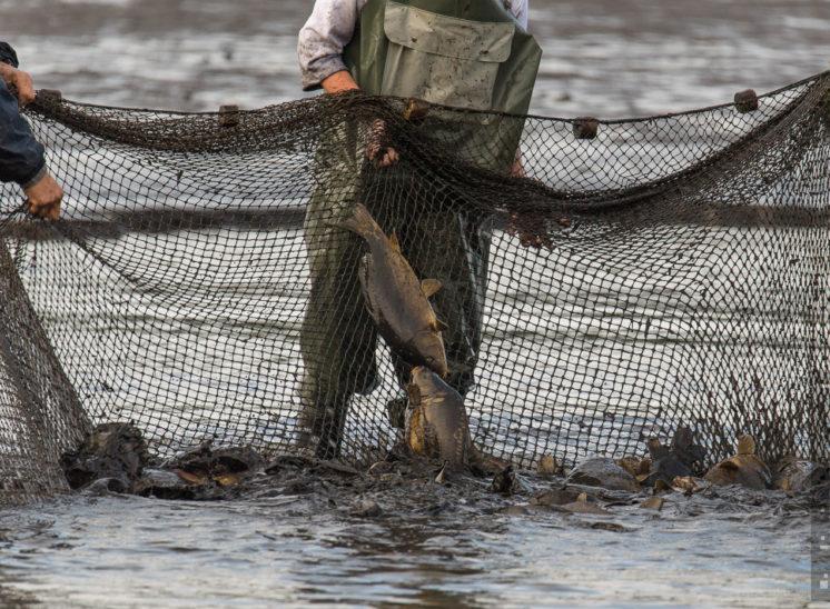 Fischzug 2017