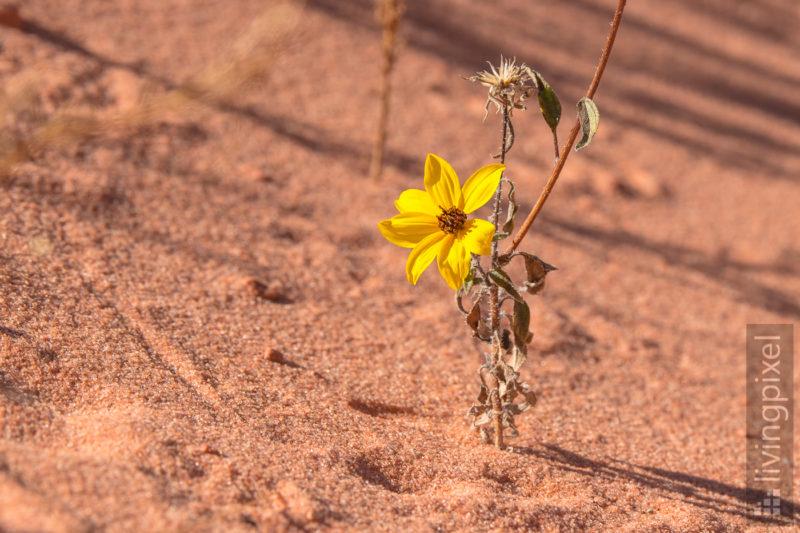 Schönheit in der Wüste
