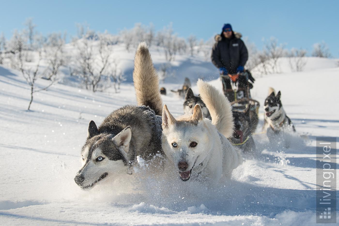 Husky Schlitten-Tour, Action