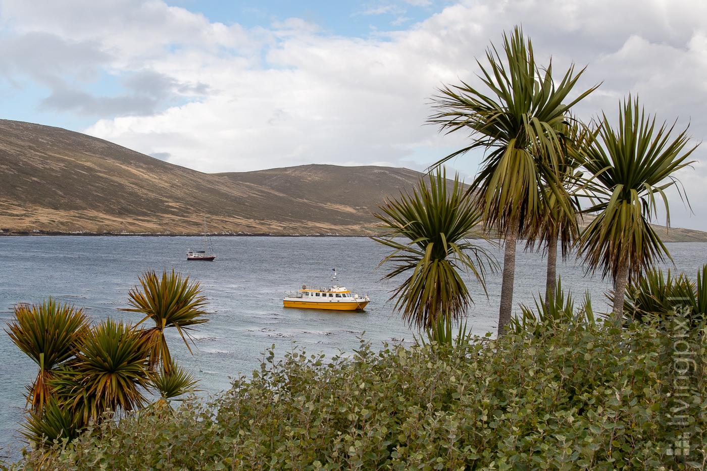 Segelboot unter Palmen