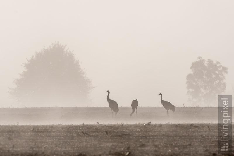 Frühstück im Nebel