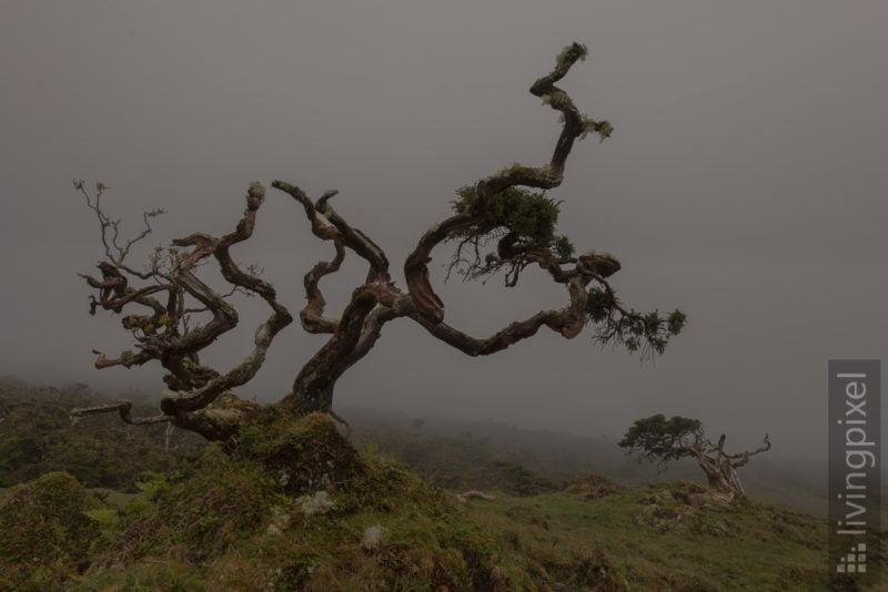 Nebel im Hochland