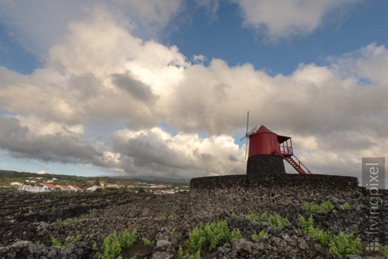 Windmühle in den Weinbergen