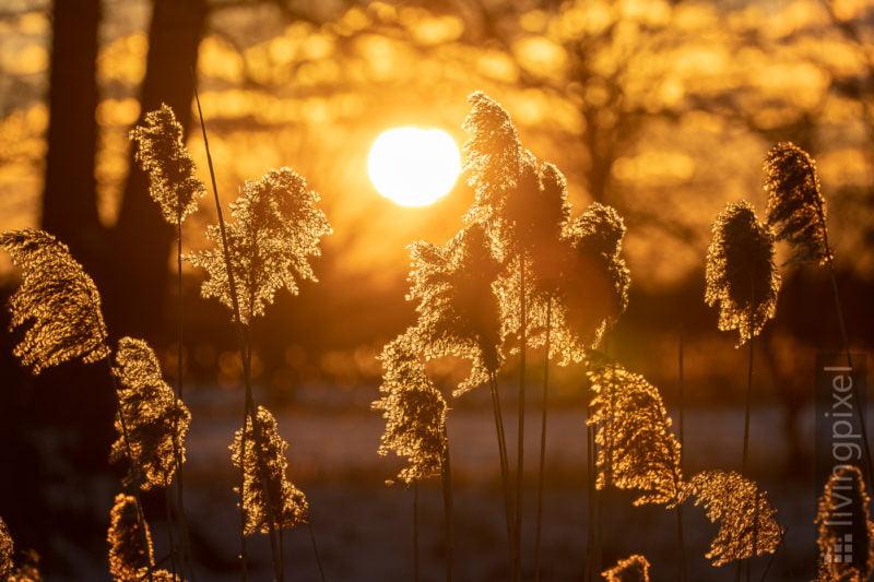 Glühen im Sonnenuntergang
