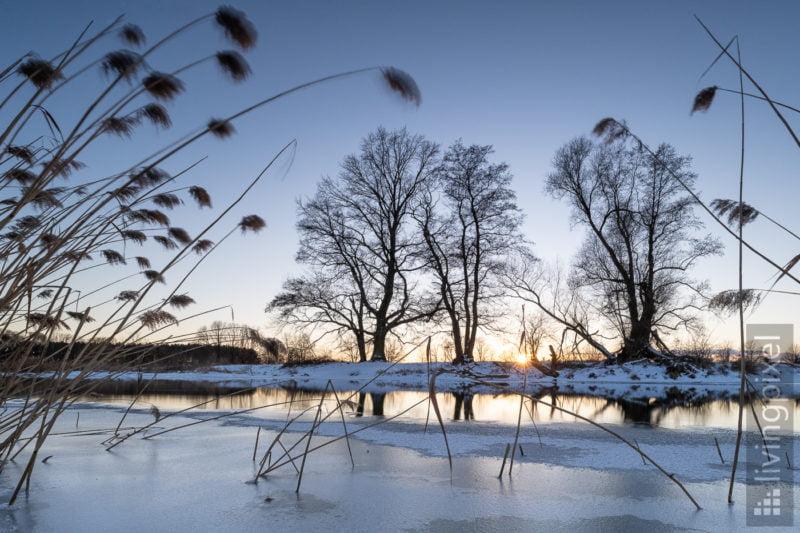 Winter-Spree